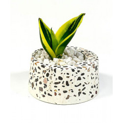 Terrazzo_Cracker_Barrel_Planter-Planters-Elite Earth-2395