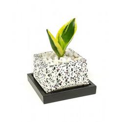 Concrete_Terrazzo_Crystal_Planter_-Planters-Elite Earth-2392