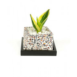 Concrete_Terrazzo_Slanty_Planter-Planters-Elite Earth-2399