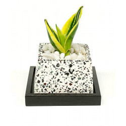 Terrazzo_Stylish_Planter-Planters-Elite Earth-2397